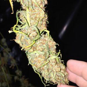 Ace Of Spades Cannabis
