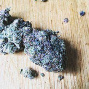 Black Tuna Cannabis Strain