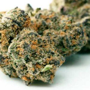 Blue Cookies Cannabis Strain