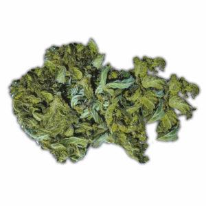 Chemdawg 91 Medical Marijuana