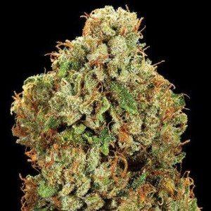 Kona Gold Cannabis Strain