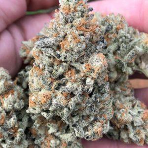 Buy Mimosa Marijuana Strain