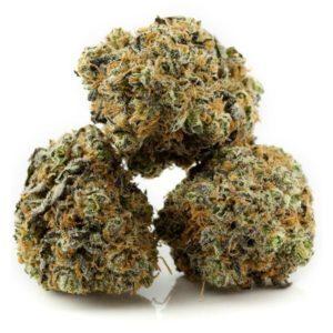 Monster Cookies Cannabis Strain