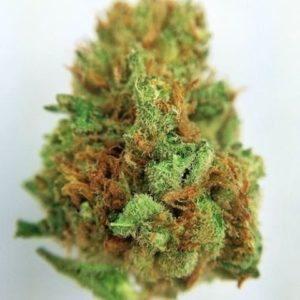 Buy Sublime Cannabis Strain