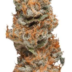 Buy Taffie Cannabis Strain